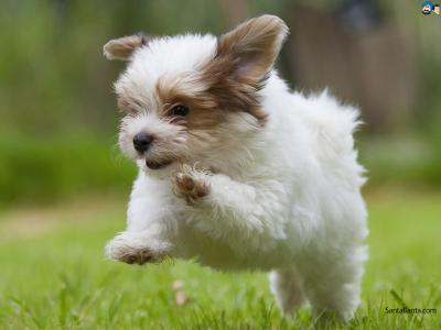 Jumping doggy