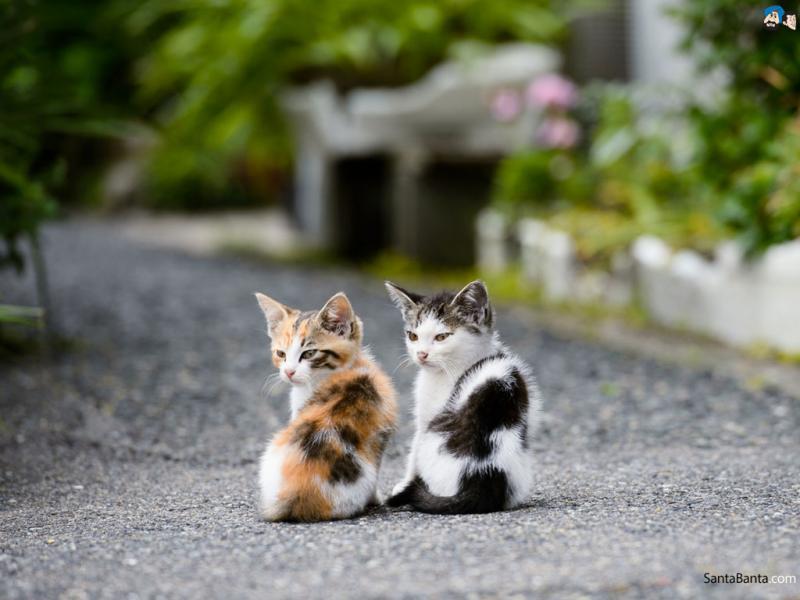 Bro Cats